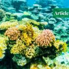 great barrier reef adani